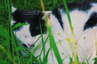 猫,花,動物,屋外,緑,植物,白,黒,草,ネコ科