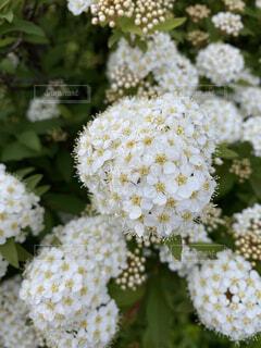花,白,ブロッコリー,米,草木,ニンジン,ブロッサム