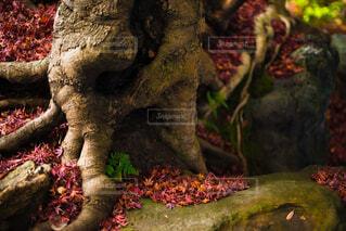 花,秋,紅葉,樹木,像,草木,モミジ