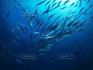 魚,水族館,水面,葉,泳ぐ,水中,ダイビング,水中カメラ,スキューバ ダイビング,海洋生物学