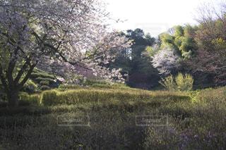 自然,空,花,桜,屋外,緑,草原,景色,草,樹木,新緑,草木,日中