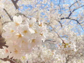 春,桜,出会い,スタート