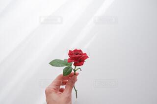 心紅の写真・画像素材[4346720]