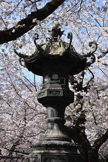 花,桜,屋外,神社,樹木,灯篭