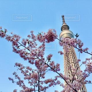 東京スカイツリーの写真・画像素材[4370937]