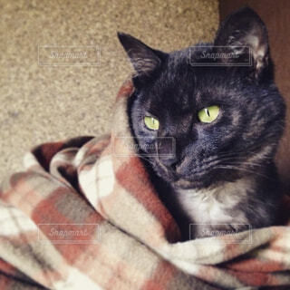 猫,動物,屋内,かわいい,黒,Instagram,ペット,cat,黒猫,ブランケット,ネコ科,肌寒い,ブラックスモーク