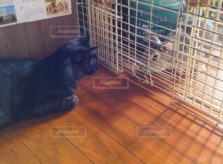 猫,動物,うさぎ,屋内,黒,ペット,黒猫,見つめる,ネコ科,対面