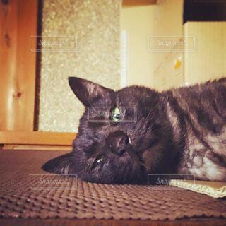 猫,かわいい,Instagram,ペット,癒し,cat,黒猫,ダンボール,こんにちは,ネコ科,はみ出す,ブラックスモーク