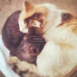 猫,動物,かわいい,親子,Instagram,ペット,子猫,cat,黒猫,三毛猫,愛情,猫の親子,暖め合う,親子の絆