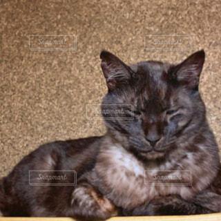 猫,動物,ペット,cat,黒猫,まったり,ネコ科,香箱座り,寛ぐ,保護猫,ブラックスモーク