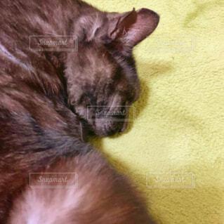 猫,動物,屋内,かわいい,ペット,寝る,cat,黒猫,おねんね,sleep,保護猫,ブラックスモーク,ホットカーペット