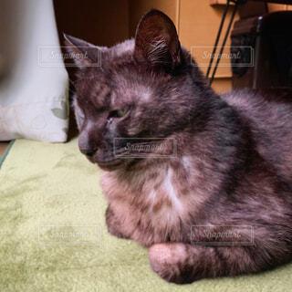 雨を心配する黒猫さんの写真・画像素材[4370868]