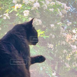 網戸越しの黒猫と外の景色の写真・画像素材[4390964]