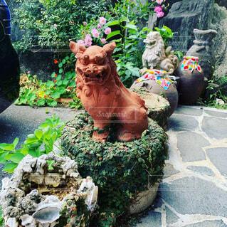 花,動物,屋外,沖縄,像,シーサー,草木,ガーデン