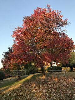 空,公園,秋,屋外,葉,草,樹木,落葉,草木
