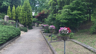 花,屋外,草,樹木,草木,ガーデン,パス