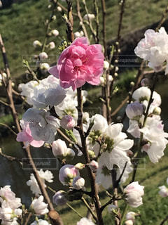 花,春,屋外,草,草木,ブルーム,ブロッサム,フローラ