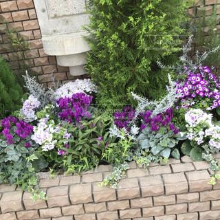 花,屋外,紫,レンガ,植木鉢,観葉植物,石,草木,ポット,ガーデン