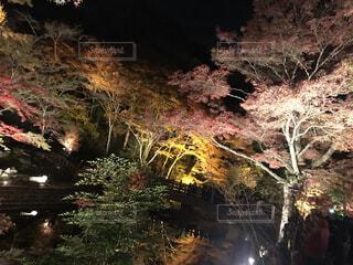 自然,夜,屋外,樹木