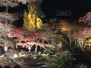 自然,秋,屋外,樹木
