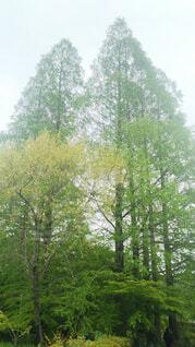 空,屋外,霧,樹木,草木