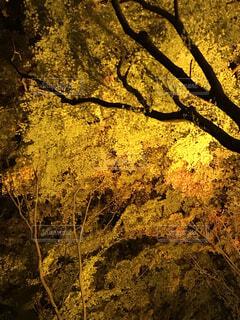 自然,風景,秋,屋外,樹木,草木