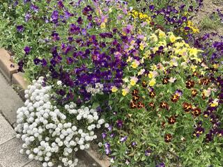 花,屋外,紫,草木,ガーデン