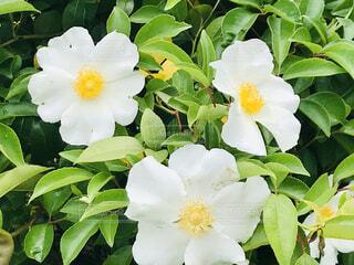 花,バラ,花びら,草木,フローラ,ロサ nutkana,ローザ製品,常緑のバラ,ウィンドフラワー,カロライナバラ,イヌバラ