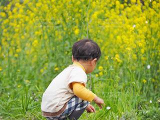 菜の花畑で遊ぶ男の子の写真・画像素材[4337624]
