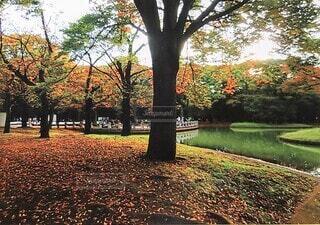 自然,空,公園,秋,屋外,湖,水面,葉,草,樹木,草木,カエデ