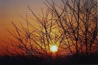 日の写真・画像素材[4343561]