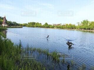 自然,風景,空,春,鳥,屋外,湖,緑,川,水面,風車,池,夕方,飛ぶ,景色,草,樹木,新緑,鴨,水草,三匹
