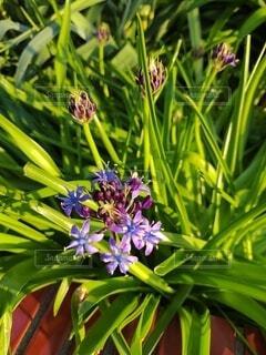 自然,春,緑,植物,一輪,景色,紫の花,新緑,草木,フローラ