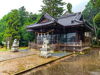 空,雨,屋外,神社,樹木,狛犬,寺,遊び場,ノスタルジック,お参り,草木,ガーデン,土砂降り