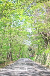 自然,森林,木,屋外,緑,道路,北海道,景色,木漏れ日,樹木,道,草木