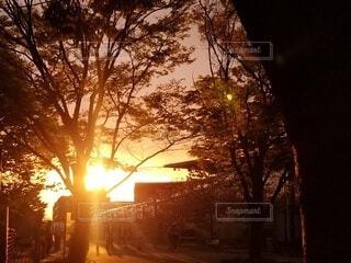 空,夕日,屋外,太陽,夕焼け,夕暮れ,日光,霧,樹木,朝,日の出,通り,草木,バックライト,日中,ゆうやけこやけ