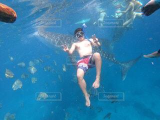 ジンベイザメを背景にピースの写真・画像素材[4370766]