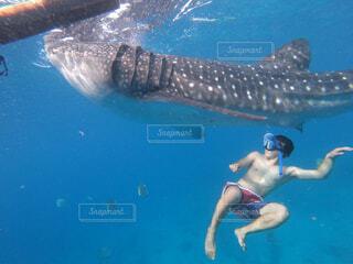 ジンベイザメと泳いでみたの写真・画像素材[4370765]