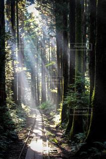 自然,風景,屋外,森,緑,景色,光,道,陽光