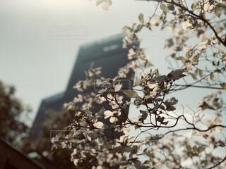 空,花,春,ハルカス,ひだまり,ブロッサム