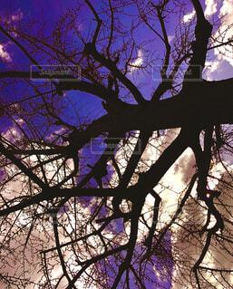 空,屋外,雲,大木,樹木,草木