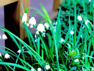 自然,花,庭,緑,植物,白,植木,草木,ガーデン