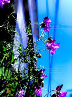 自然,花,青空,フラワー,花びら,ブルーム