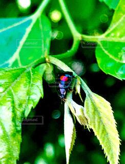 自然,動物,緑,葉,昆虫,てんとう虫,ヒカリ,草木,カブトムシ