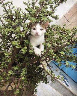 猫,植木鉢,外国,旅行,野良猫,チュニジア