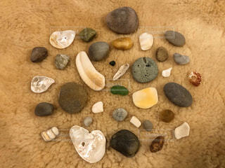 屋内,貝殻,石,シーグラス,ピーチコーミング