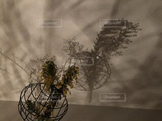 自然,花,ドライフラワー,霧,影,樹木,ミモザ