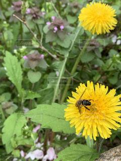 花,屋外,ひまわり,黄色,蜂,草木,花粉