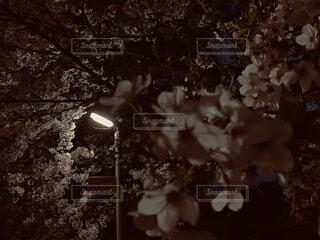 花,桜,樹木