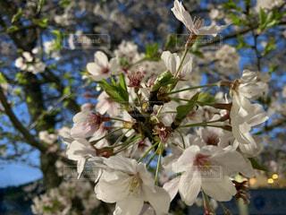 花,春,樹木,草木,ブルーム,ブロッサム